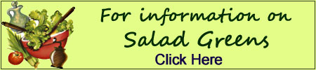 information on salad greens